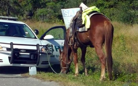 Florida DUI on Horse