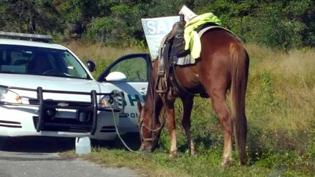 Florida DUI on Horse